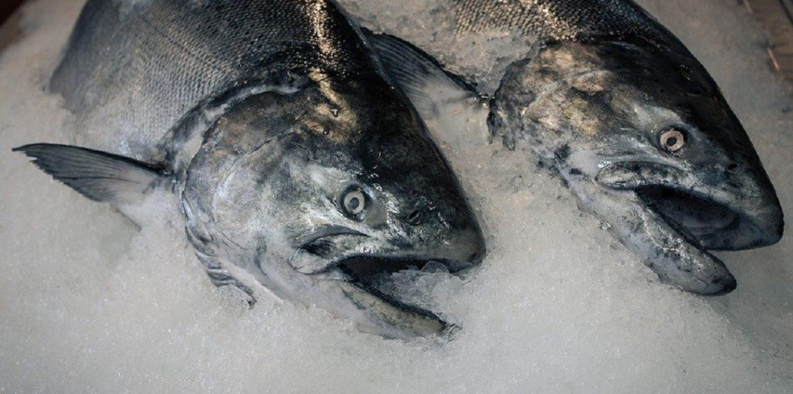 Покупка свежей рыбы